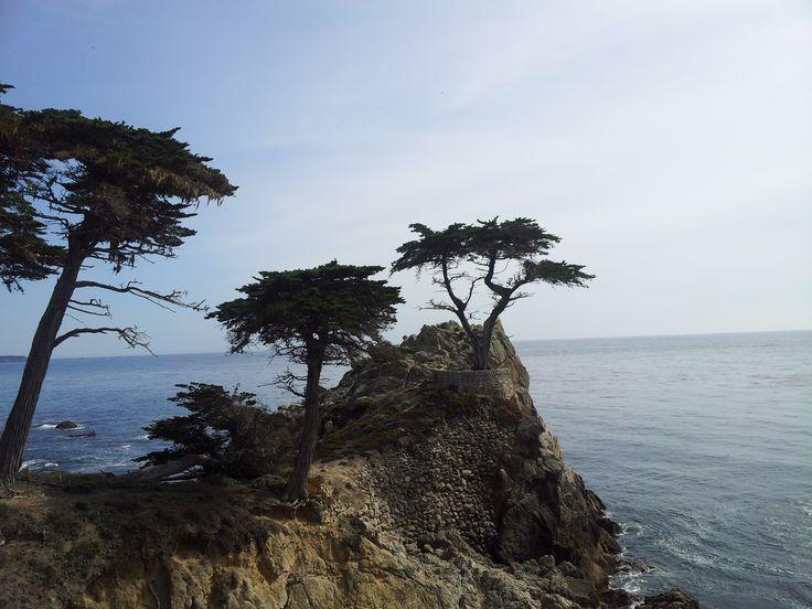 The Lone Cypress, Pebble Beach