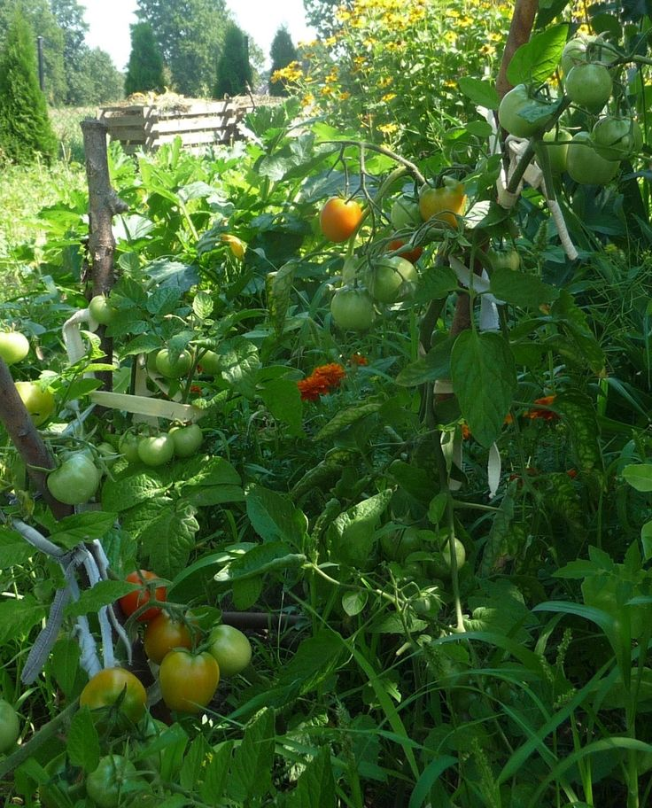 Ręko-czyny: Pora na pomidora