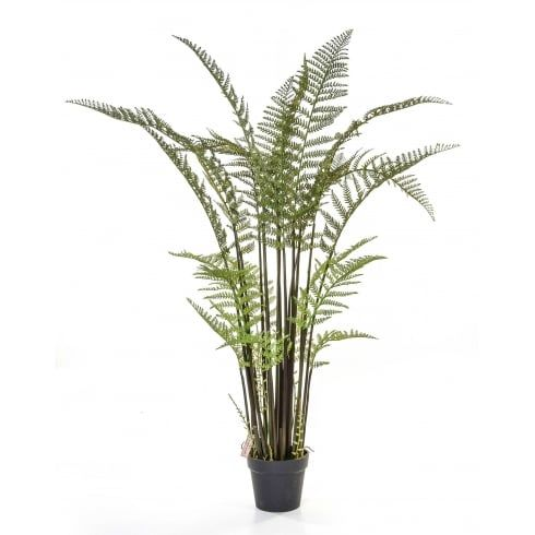Artificial Fern, Perfect Touch Of Hard Wearing Fake Greenery For Offices  And Reception Areas