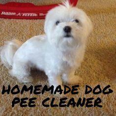 Best 25 Dog Pee Ideas On Pinterest Dog Pee Smell