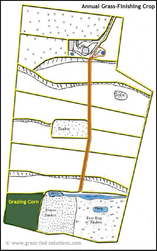 Example Farm Plan: annual grass-finishing crops