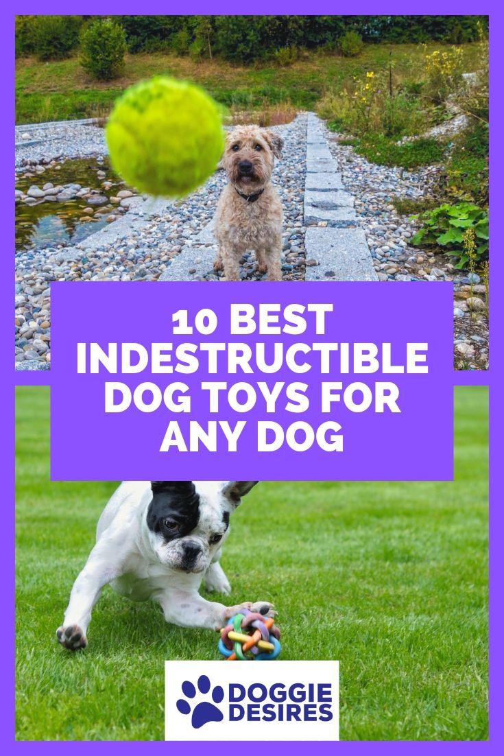 10 Best Indestructible Dog Toys For Any Dog Dog Toys Best Dog
