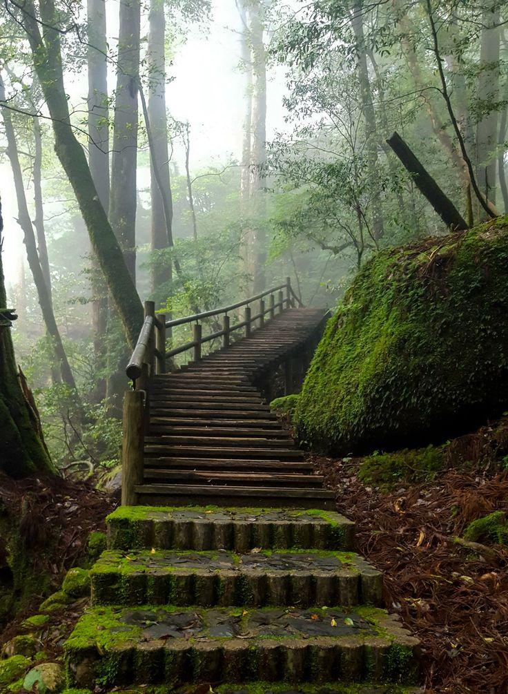 Moss Stairs Yakushima Forest