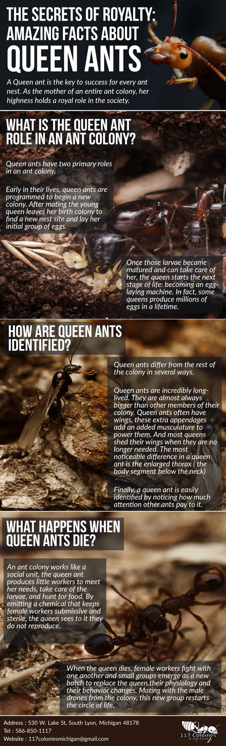 The Secrets Of Royalty: Amazing Facts About Queen Ants #infographic http://bit.ly/2mvUxoF