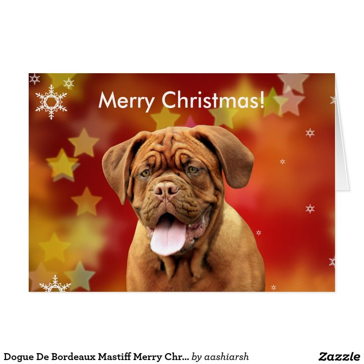 Dogue De Bordeaux #Mastiff Merry #Christmas Stars #Card #animal #dog #pet