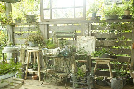 http://herbalhouse.cocolog-nifty.com/blog/