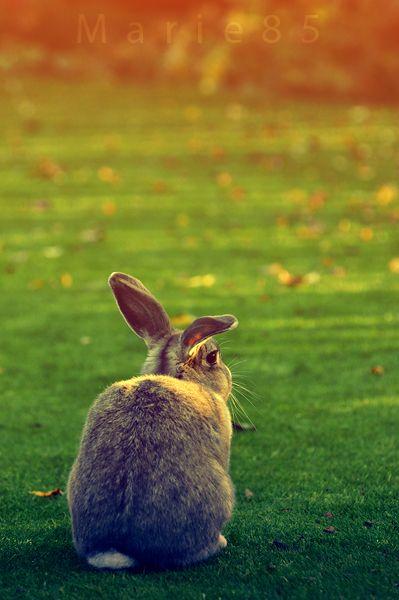 Autumn bunny by *Marie85 on deviantART: http://marie85.deviantart.com/art/Autumn-bunny-260934716