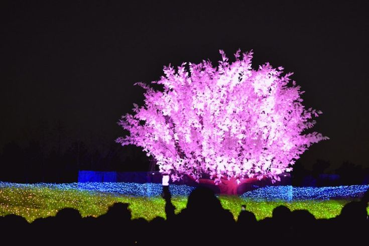 Winter-light-Festival-in-Japan-14