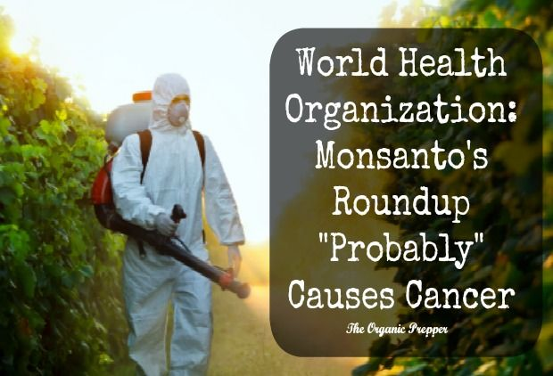 Monsantos' herbicide has finally been declared a probable carcinogen by a WHO associated group, vindicating those who have been raising red flags about its harms for years.