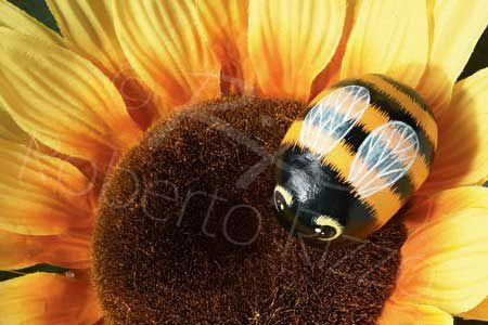 Bee | Rock painting art by Roberto Rizzo