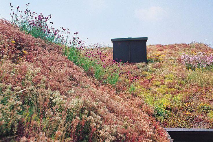 Zielone dachy. Dach intensywny czy ekstensywny?  http://www.liderbudowlany.pl/artykul/240/Zielone_dachy #greenroofing #greenroof #zielonydach