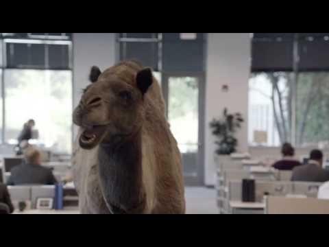 "▶ Geico - Hump Day REMIX ""Guess What Day It Is"" Camel (FINAL) Happier than a Camel on Wednesday - YouTube"