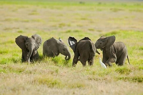 It's paradise; oh my heart. .!! Credit : @saraelephants - For info about promoting your elephant art or crafts send me a direct message @elephant.gifts or emailelephantgifts@outlook.com  . Follow @elephant.gifts for inspiring elephant images and videos every day! . .  #elephant #elephants #elephantlove