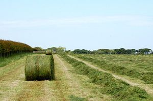 Silage - Wikipedia, the free encyclopedia