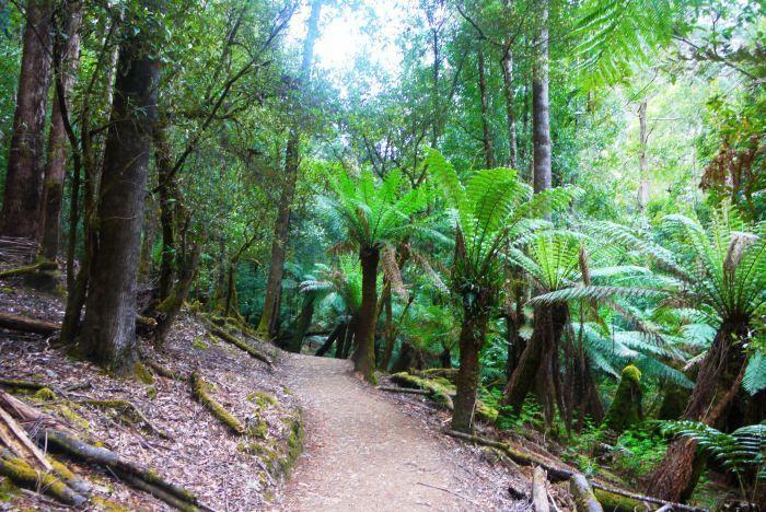 Ścieżka w Parku Narodowym #MountField