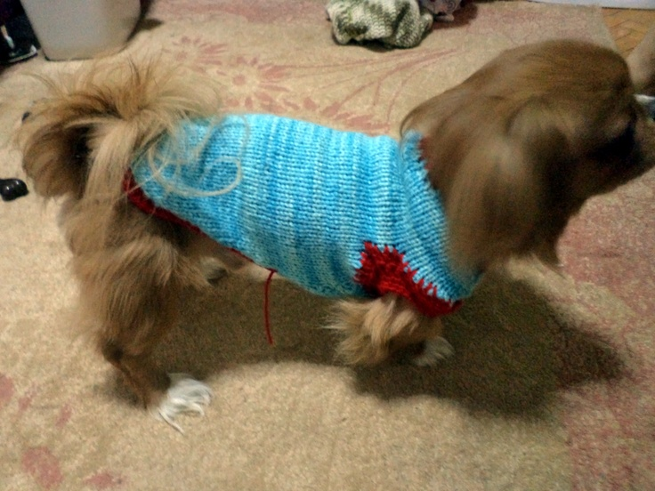 My sweet dog Otis new knitted sweater..