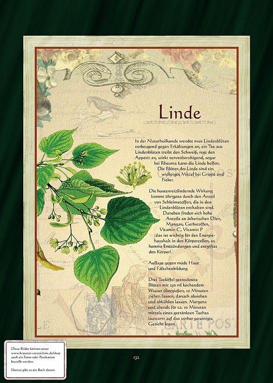 Linde - Lindenblüte