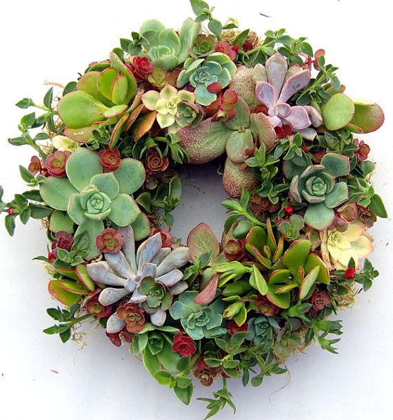 Succulent Wreath Secret Garden