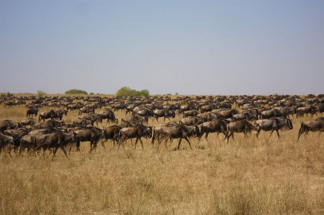 serengeti: Africa Safari, Annual Movement, Camps Moving, Parks Years, Places I D, National Parks, Central Africa, Awesome Places, Canvases