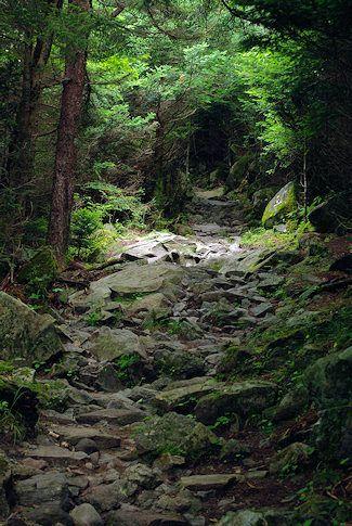 Le sentier de randonnée Forney Ridge Andrews chau…