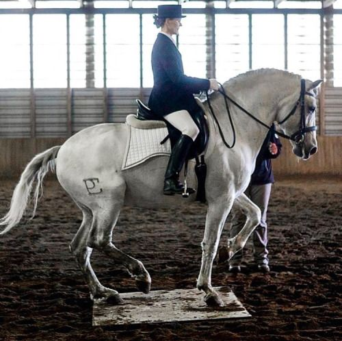 Now this is an excellently ridden piaffe. Only the lightest contact is necessary when a horse has reached the highest form of collection.