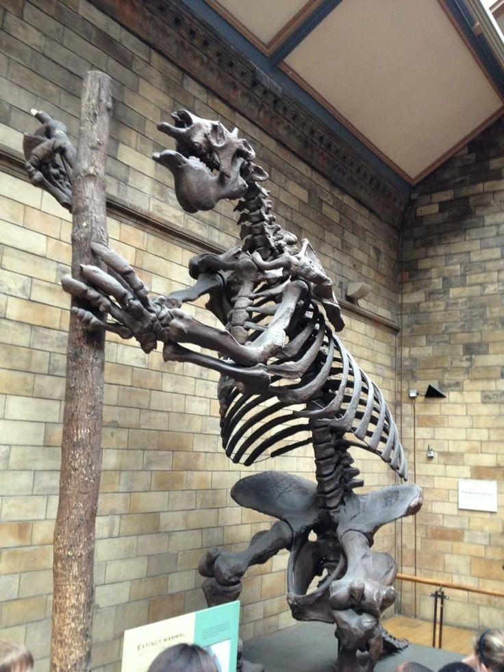 37 best prehistoric animals images on pinterest nature
