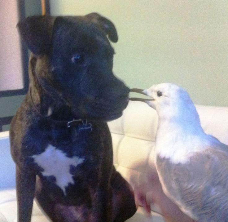 interspecies friendship #1
