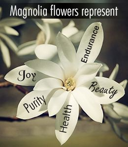 Magnolia flower symbolism and meaning