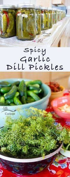 Spicy Garlic Dill Pi Spicy Garlic Dill Pickles Recipe :...  Spicy Garlic Dill Pi Spicy Garlic Dill Pickles Recipe : http://ift.tt/1hGiZgA And @ItsNutella  http://ift.tt/2v8iUYW