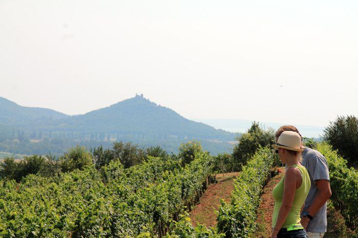 2HA Pince Szent György hegy #balaton #wine #hungary