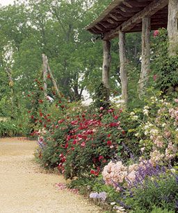 Landscaping with Antique Roses: Instead of creating a rose garden, plant a garden that contains roses.  by Michael Shoup