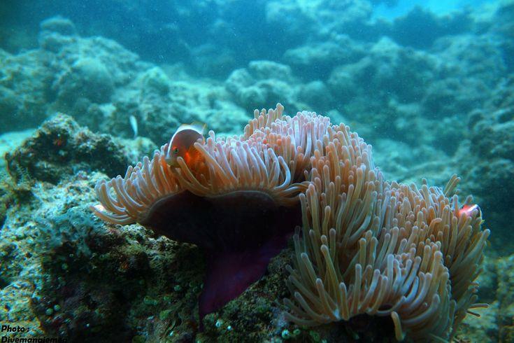 Oganisme Bawah Laut Kawasan Wisata Mandeh | Divemanajemen