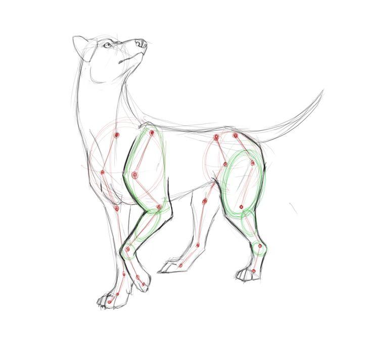 9 best Art Instruction - Animals images on Pinterest | Animal ...