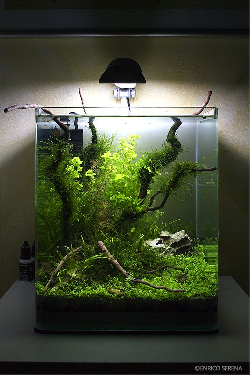 nano cube 20 l page 2 aquascaping world forum aquascape layout inspiration pinterest. Black Bedroom Furniture Sets. Home Design Ideas