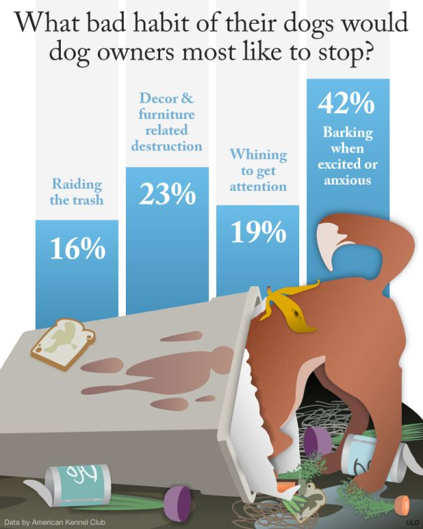 Pin By Tillie W Clifford On Dog Infographics Dog Advice Dog Infographic Dog Care