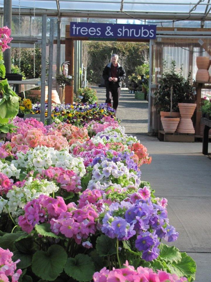 17 Best Images About Al 39 S Garden Centers Oregon On Pinterest Gardens Shrubs And Summer Bulbs