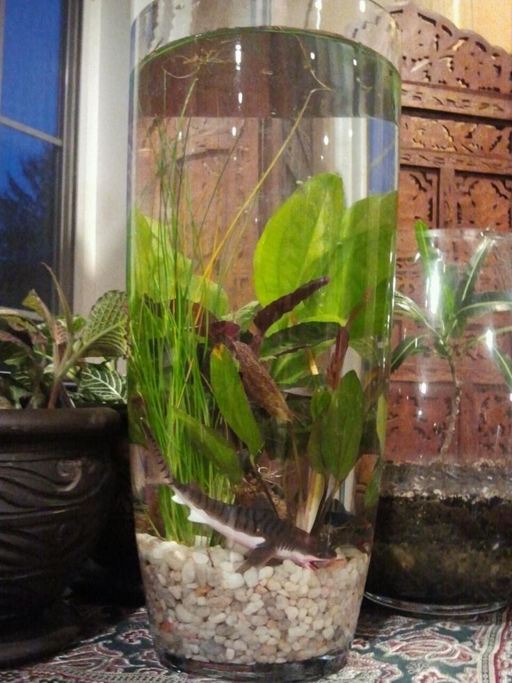 26 best water gardens images on pinterest indoor water for Outdoor aquatic plants