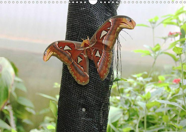"""Tier-Posterbuch """"Schmetterlinge der Tropen"""", Seite 6"""