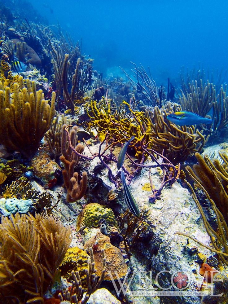 1000+ Images About Diving In The BVI On Pinterest
