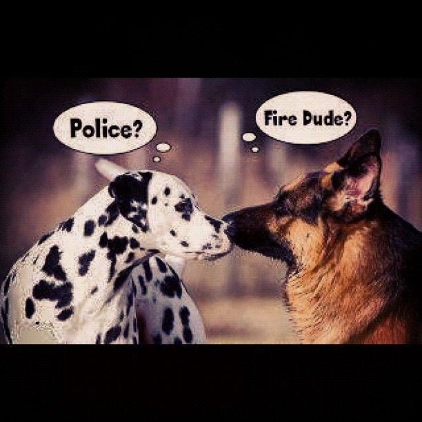 #police #dog #fire