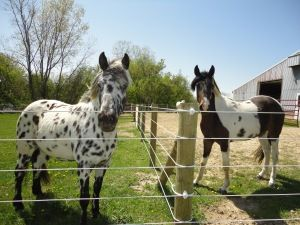 What Kind of Horse Fencing Should I Get?