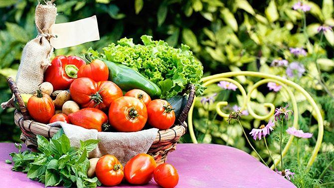 http://www.canalvie.com/maison/cour-et-jardin/articles-cour-et-jardin/les-bonnes-associations-de-plantes-dans-le-potager-1.1411606