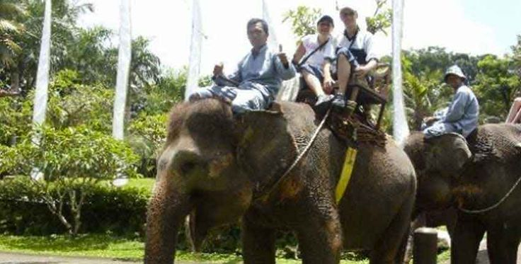 Bali Zoo Elephant Safari Ride Tour Package
