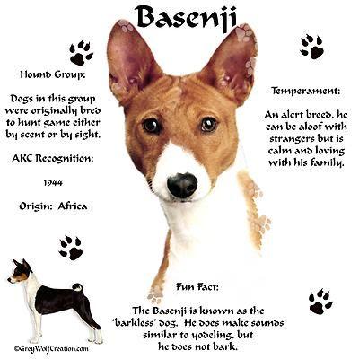 Basenji dog breeders canada