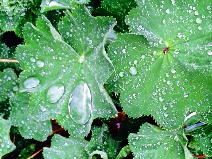 Daggkåpa i regnet