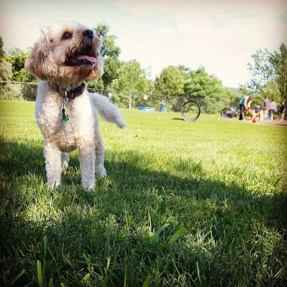 I love the dog park! - Estelle Cohn Memorial Dog Park - Pawsitive Park - Norwich, CT - Angus Off-Leash #dogs #puppies #cutedogs #dogparks #angusoffleash