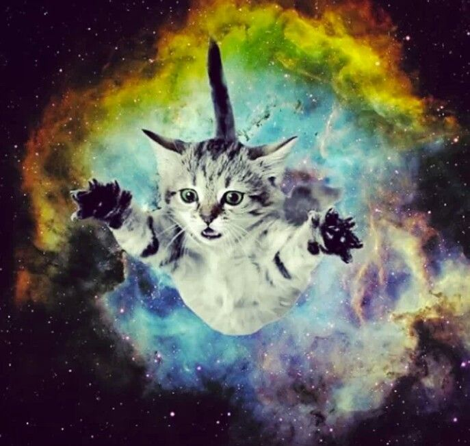 38 Best Images About Galaxy Room On Pinterest: 103 Best Images About COSMIC CATS On Pinterest