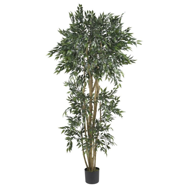 6u0027 green ash silk tree - Silk Trees
