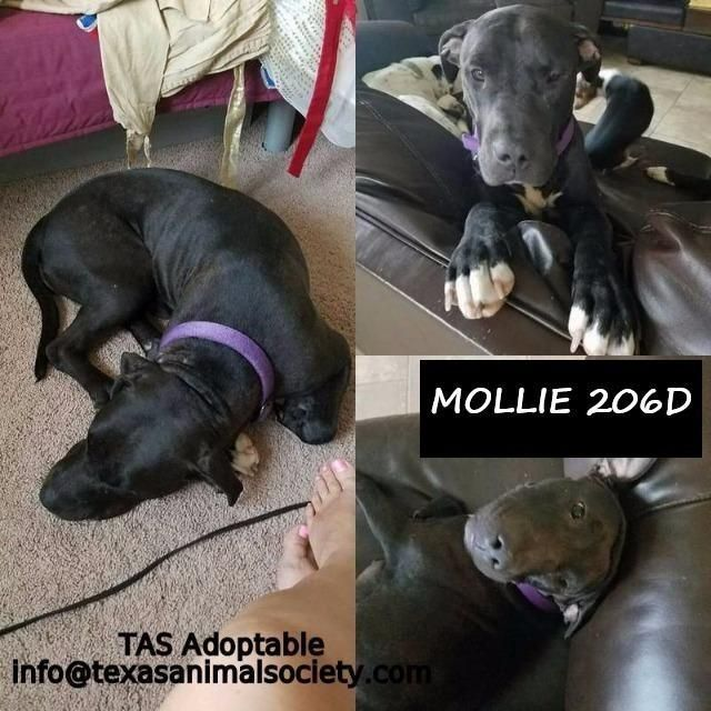 Adopt Mama Bear Mollie On Dogs Lap Dogs Animal Projects