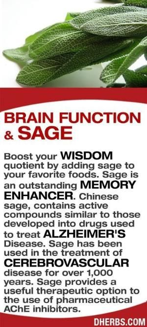 Boost your wisdom quotient by adding sage to your favorite foods. Sage is an outstanding memory enhancer. Chinese sage, contains active compounds similar to those developed into drugs used to treat Alzheimer's Disease. Sage has been used in the treatment of cerebrovascular disease for over 1,000 years. Sage provides a useful therapeutic option to the use of pharmaceutical AChE inhibitors. #dherbs #healthtips by kaye
